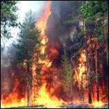 Странные полевые пожары в Удмуртии